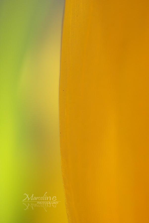 abstraction végétale