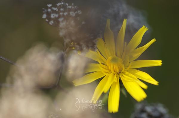 fleur jaune en automne