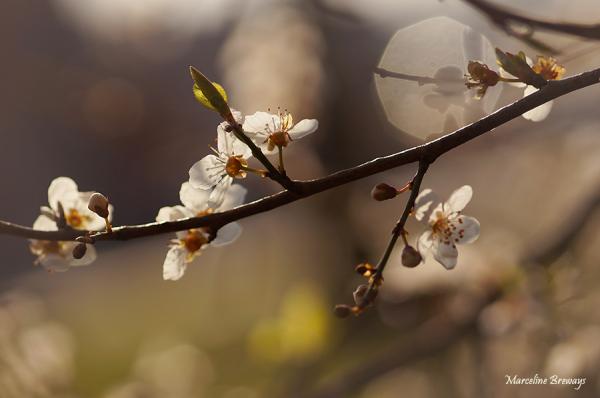 arbre printanier