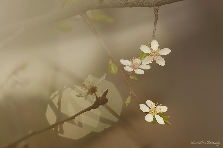 branche fleurie printemps