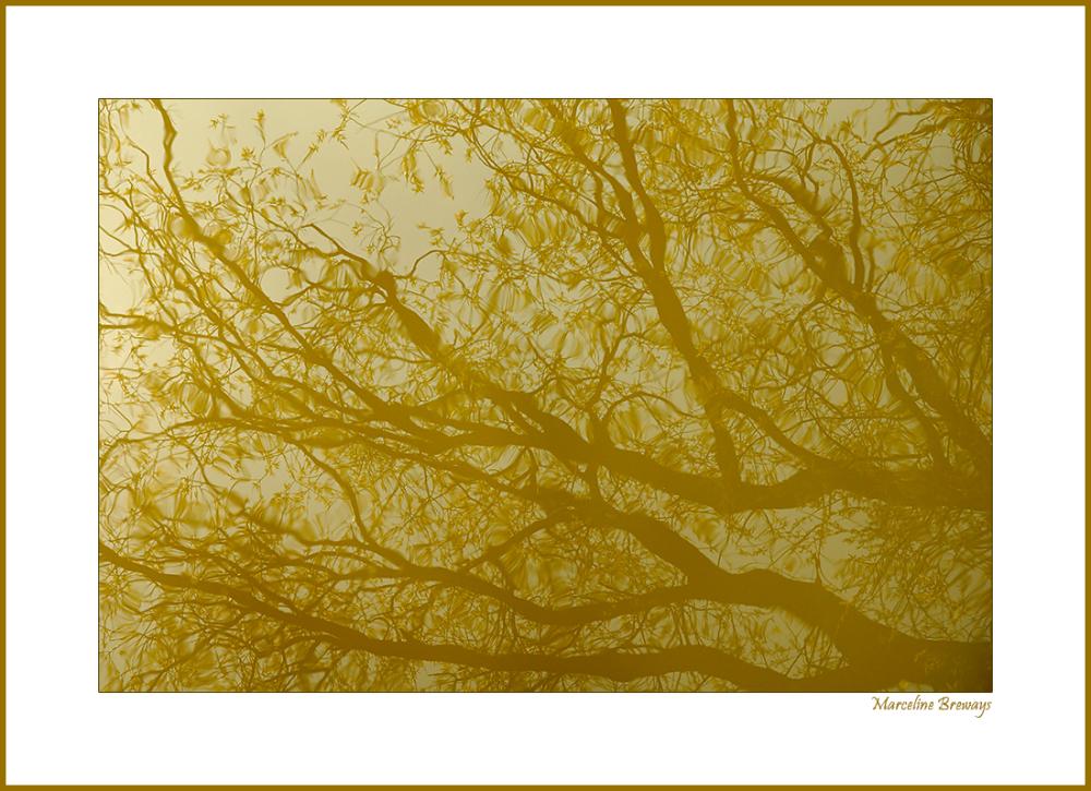 reflet d'arbres dans l'eau