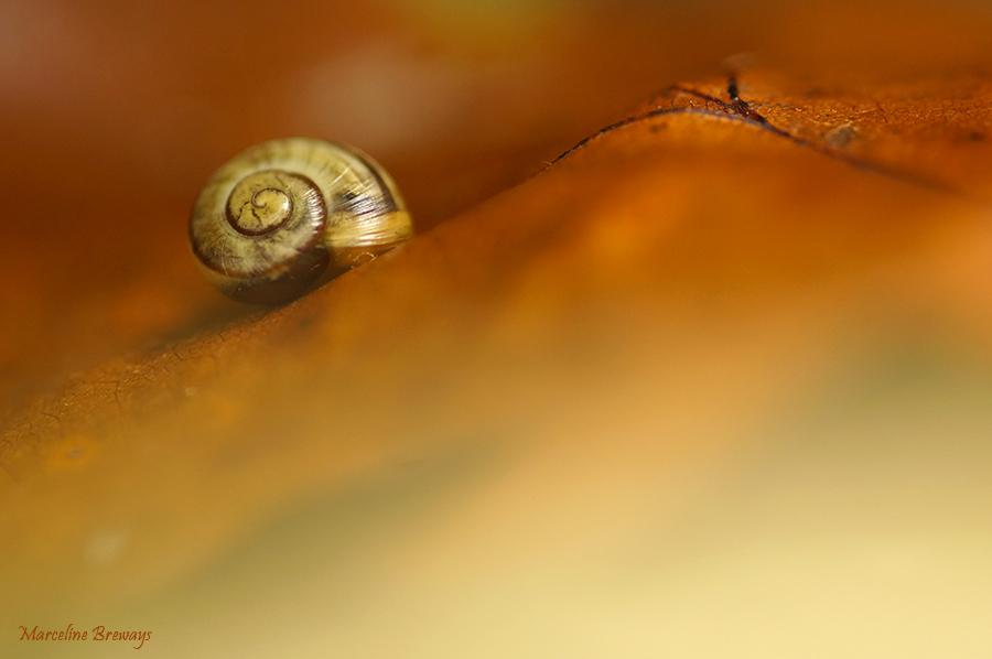 escargot sur feuille d'automne