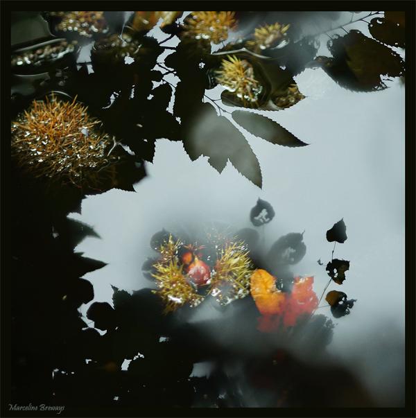 ikebana végétal