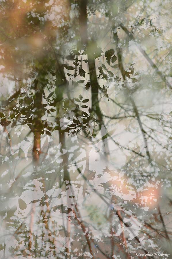 reflet d'arbre en automne