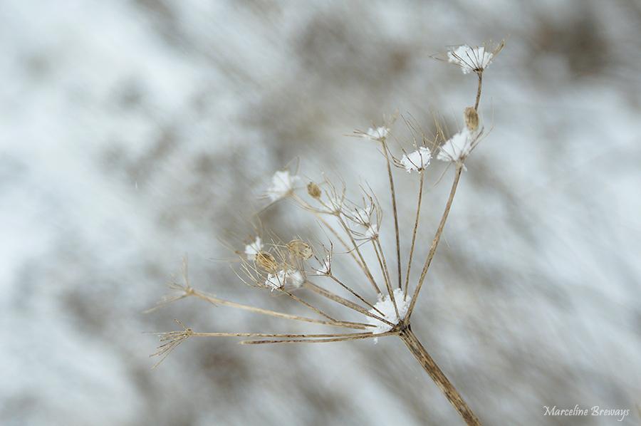 berce sous la neige