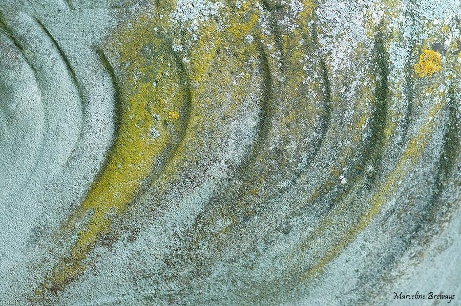 lichen sur pierre