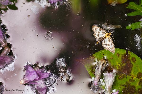reflet au papillon