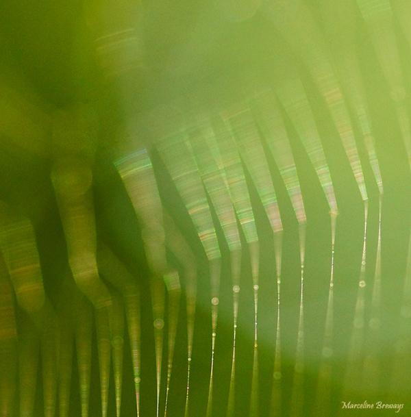 lumière sur toile araignée