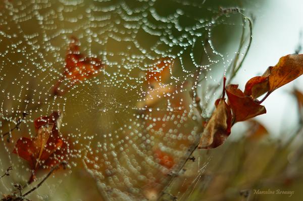 perle pluie sur toile araignée