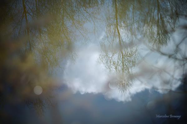 reflet arbre au printemps