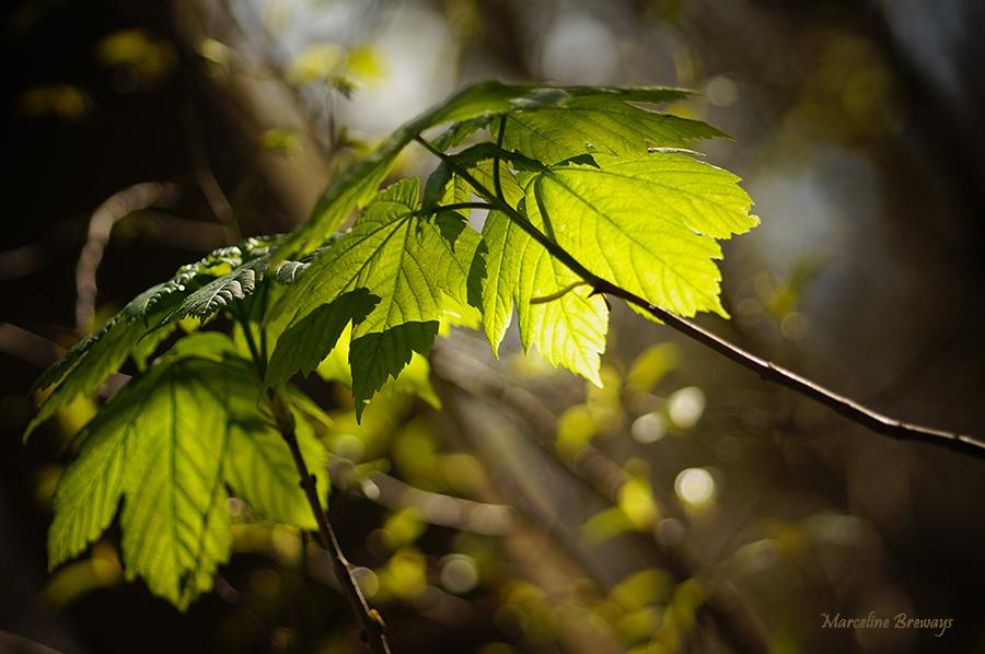 lumière au printemps
