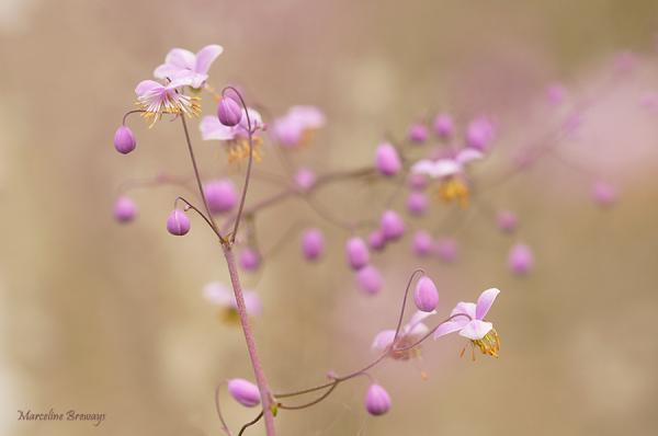 plante volubile