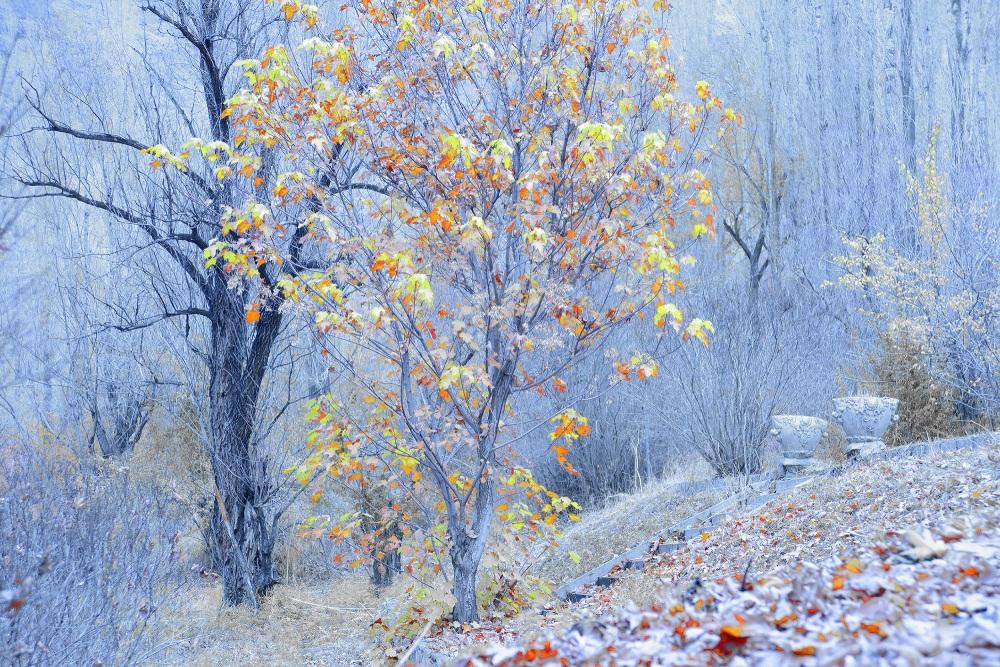 فصل سرد