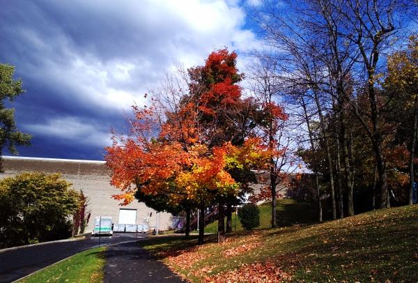 L'automne est venu! 7