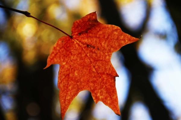 L'automne est venu! 11