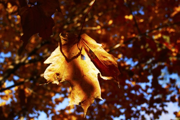 L'automne est venu! 21