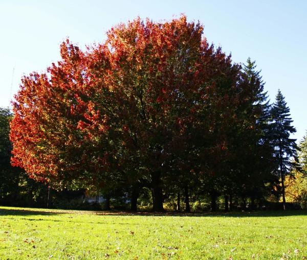 L'automne est venu!