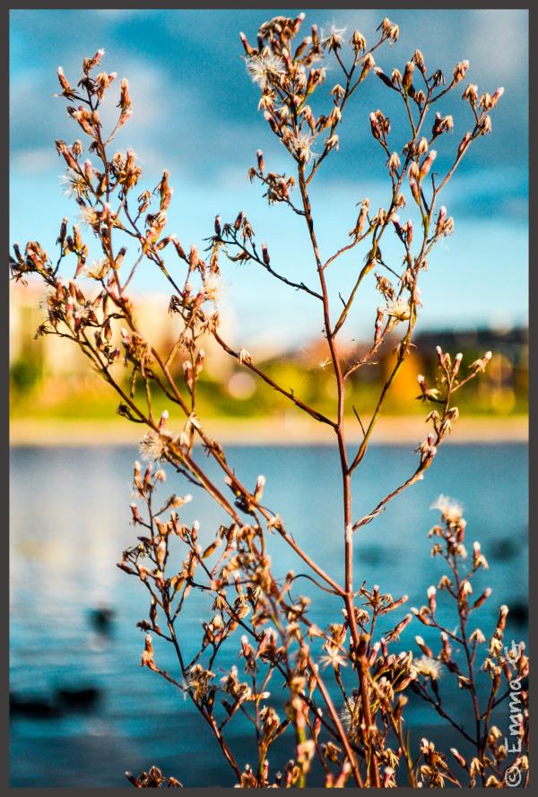 Werribi Pond