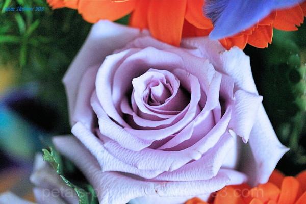 Joyce Flower #2