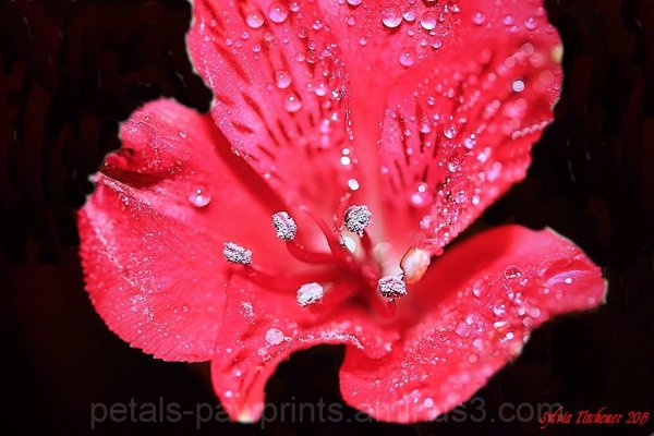 Strange Little Flower