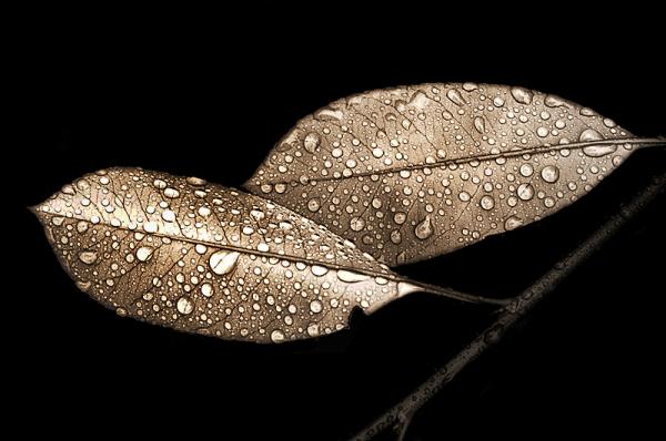 Folhas Molhadas