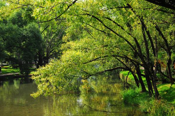 trees poolside landscape