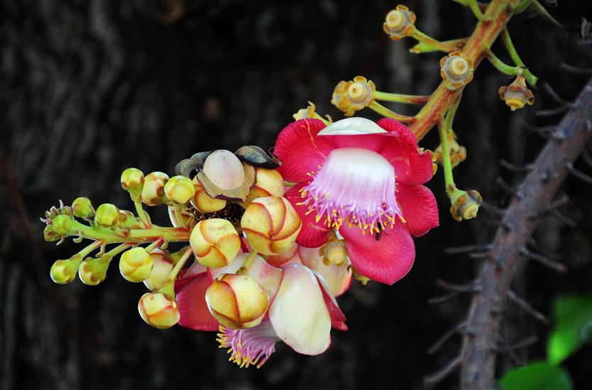 Auspicious Flower