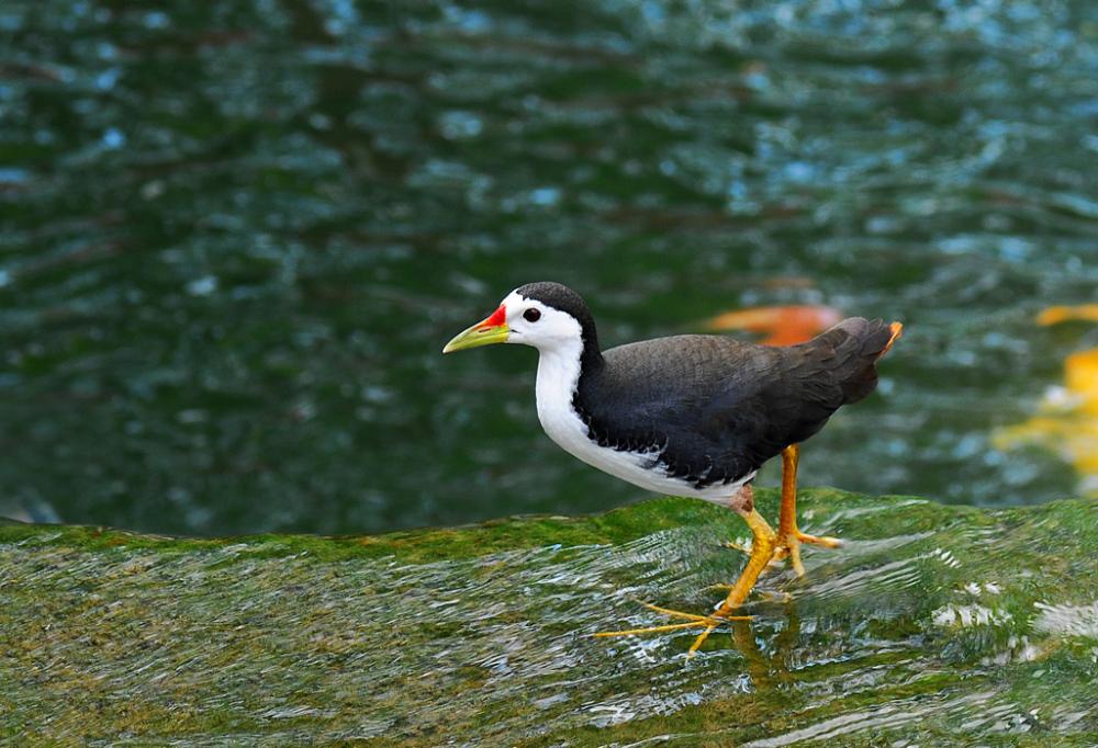 A Water Bird