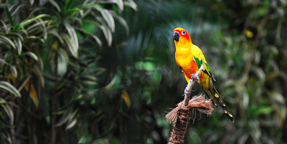 Parrot - Jurong Bird Park, Singapore