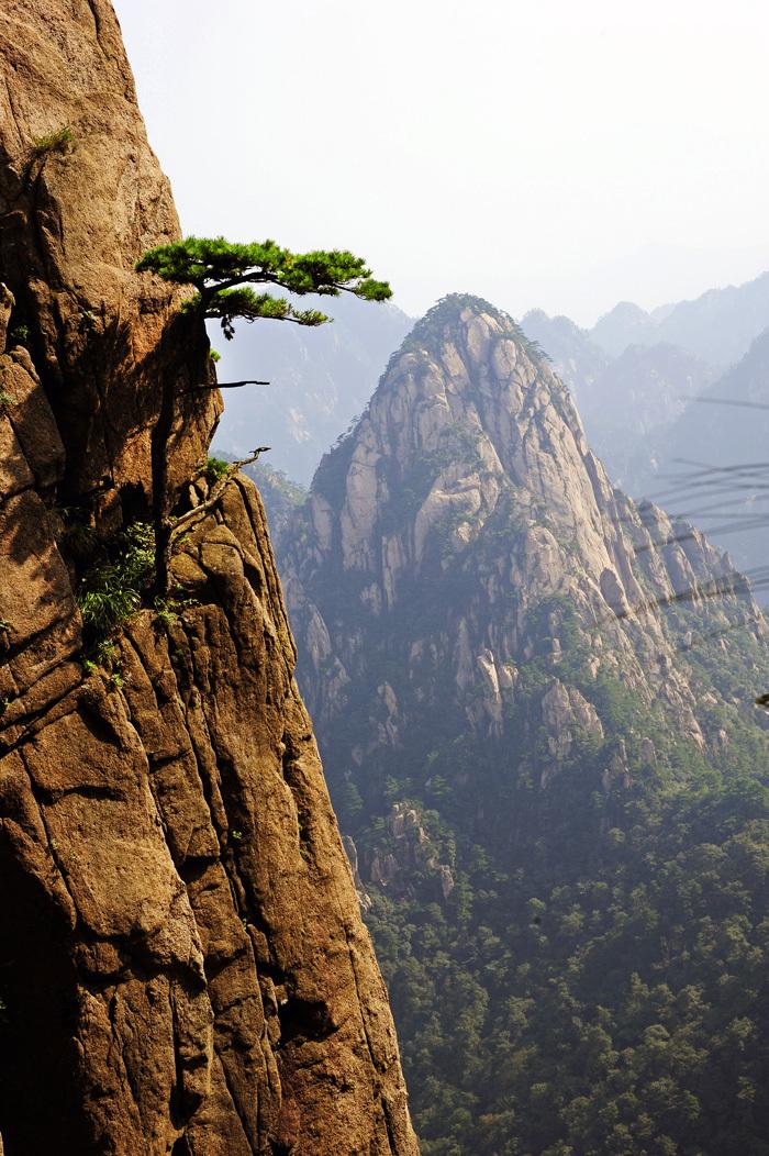 Pines of Huangshan #7