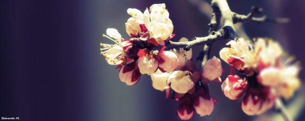 Let's take a look back at the first steps