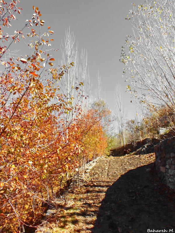 Autumn Path - 2