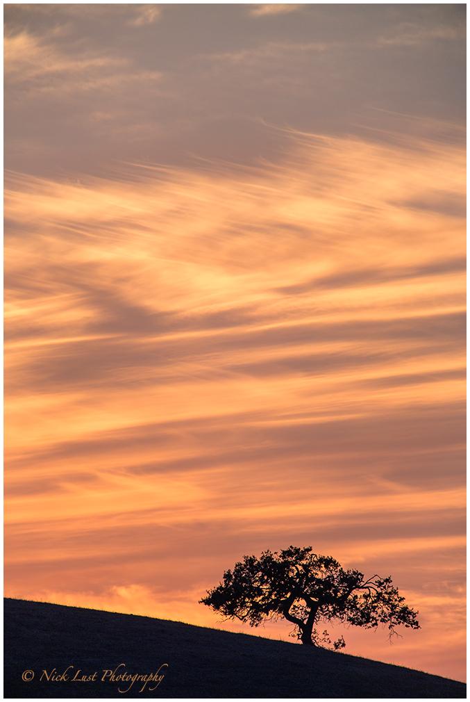 sunset, san benito county, california, oak tree fi