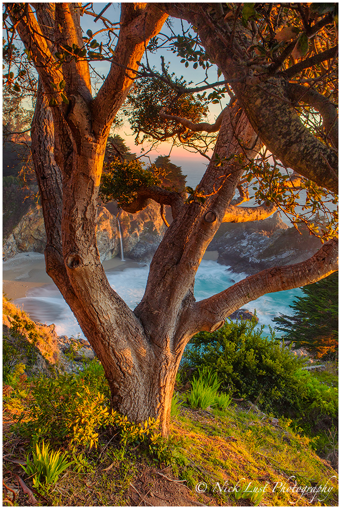 McWay Fall; Julia Pfeiffer Burns, Big Sur, CA