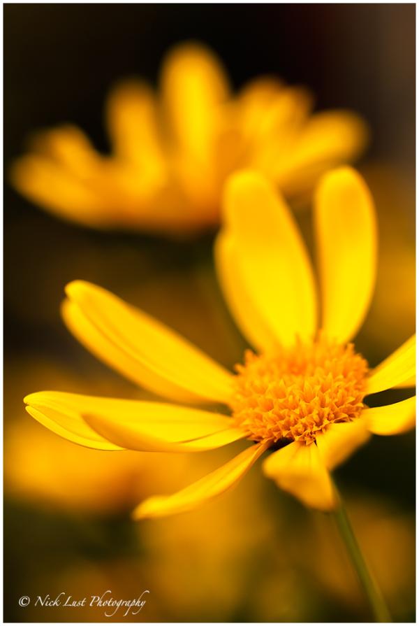 Macro Photography, flower