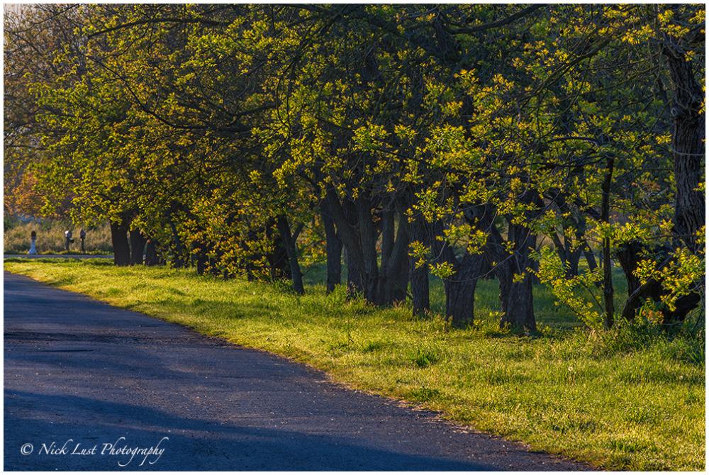 Walnut Orchard; san benito; california; rural