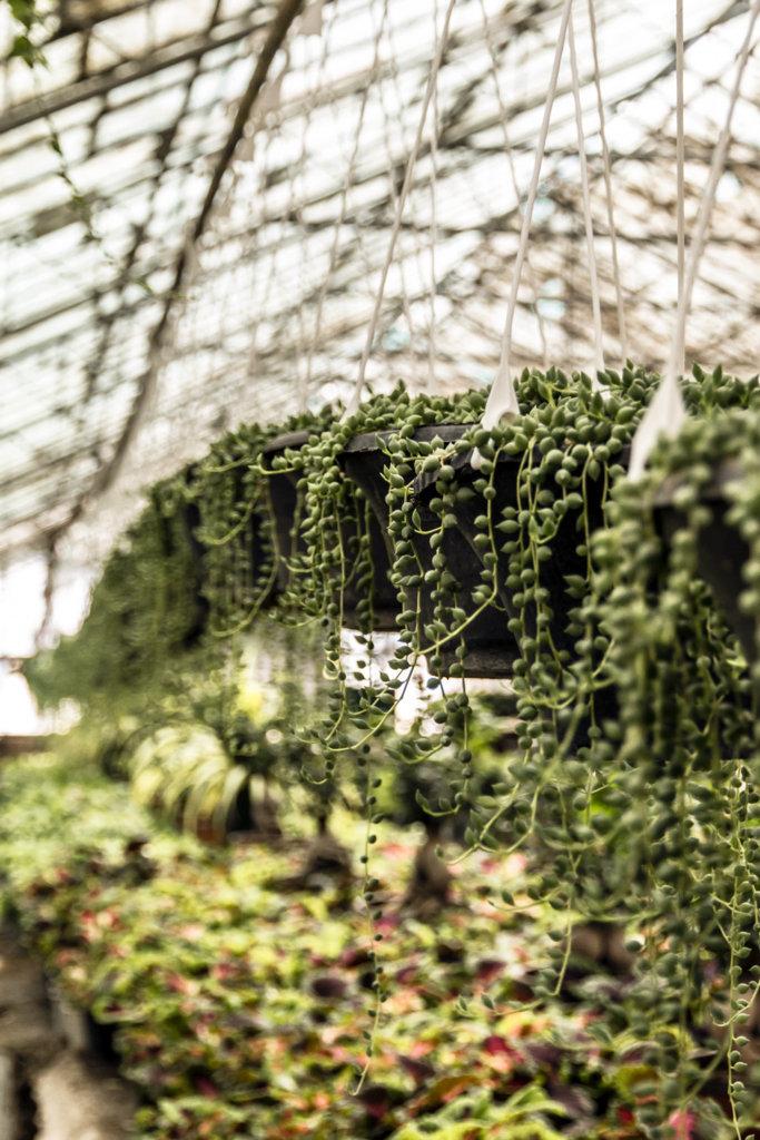 Flower Garden ,2