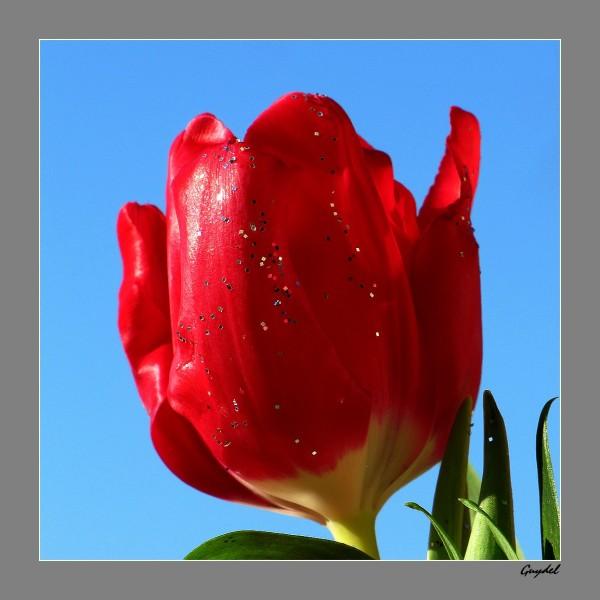Tulipe en fête !!!
