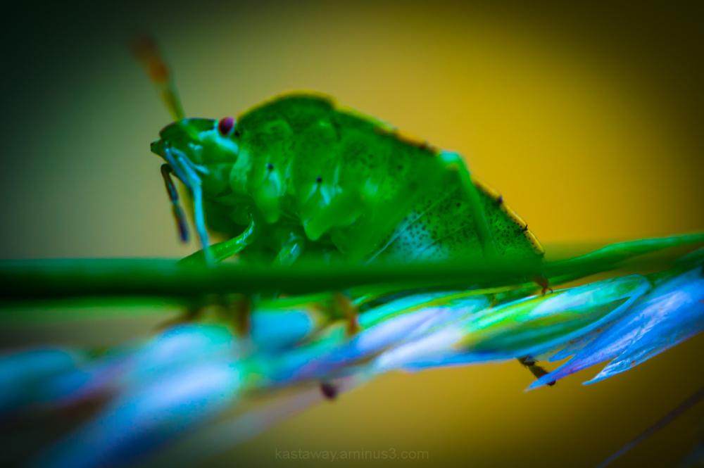 Psychedelic bug