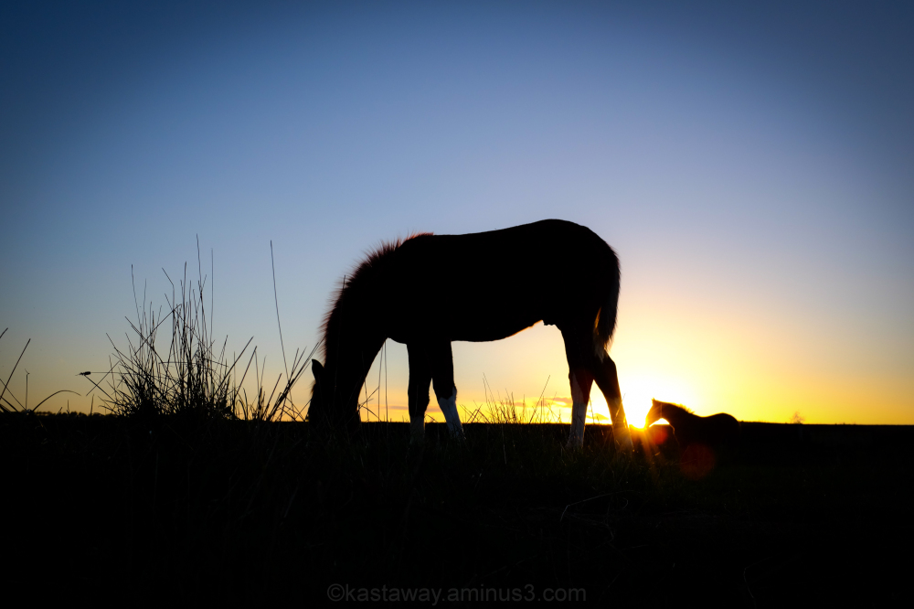 horse sunset feeding grazing field grass
