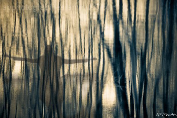 Spirit trees ...