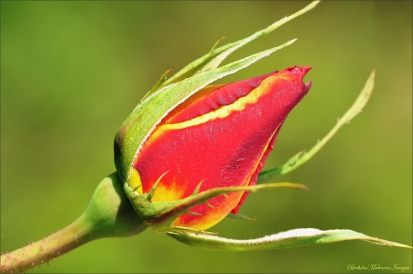 The Heart Waiting To Bloom