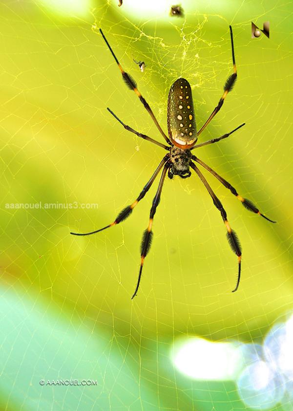 spider garden costa rica net aaanouel