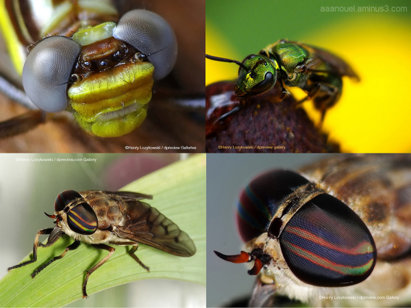 Henry Lozykowski macro bug insect dpreview.com