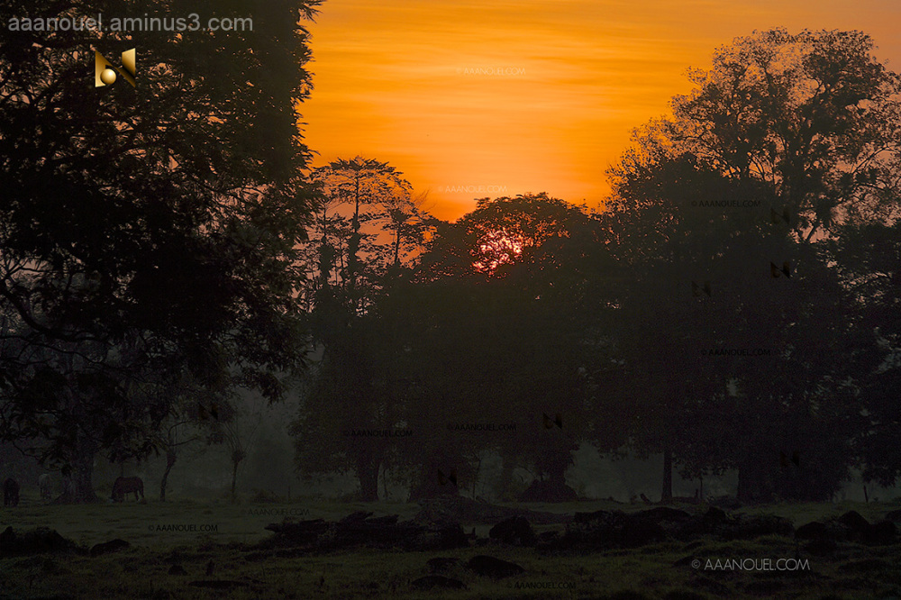 sunrise, zorro, aaanouel, costa rica, trees, ranch