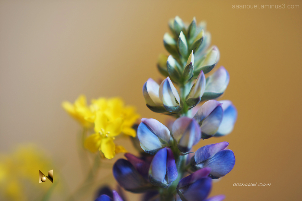 Blue and yellow tiny flowers