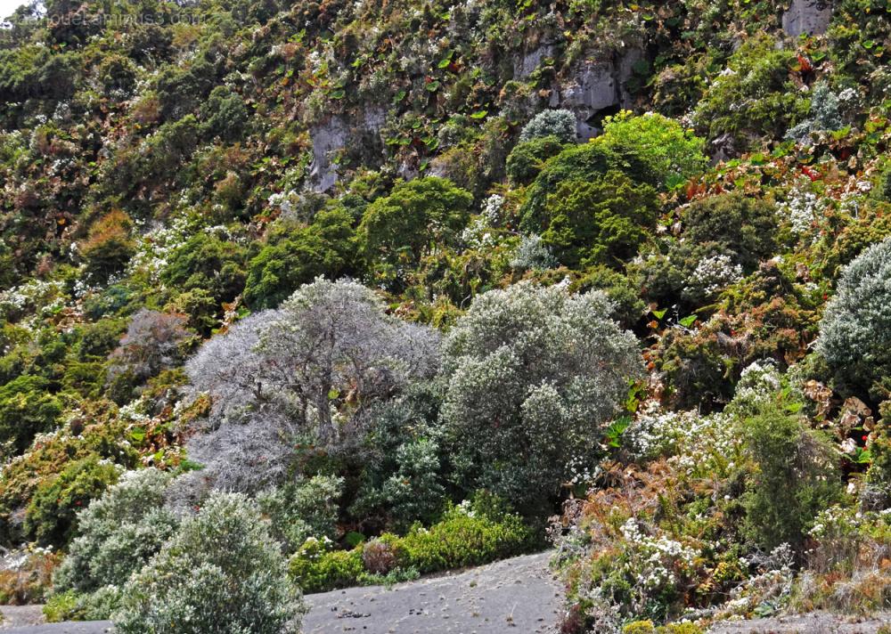 Irazu volcano aaanouel costa rica plants landscape
