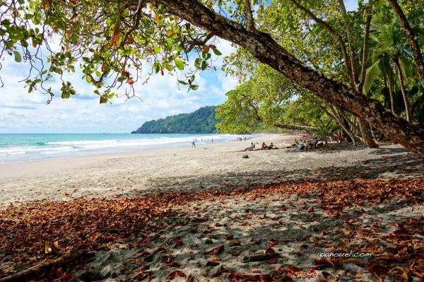 espadilla beach manuel antonio nat park aaanouel