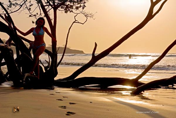 tamarindo beach backlight tree sea sunset aaanouel