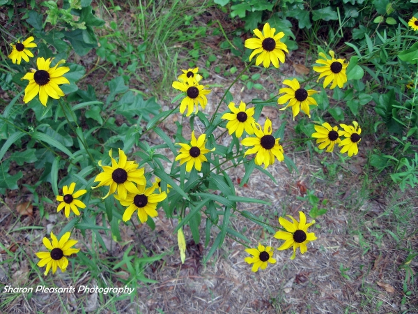 Yellow Delight